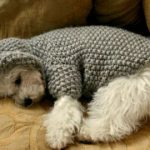 Kleine hond trui / haak hond kleding / Pet kleding / Winter hond Hoodie / warme hond kleding - Outfits van de hond / pup trui / BubaDog